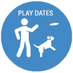 Columbus Dog Play Date Services