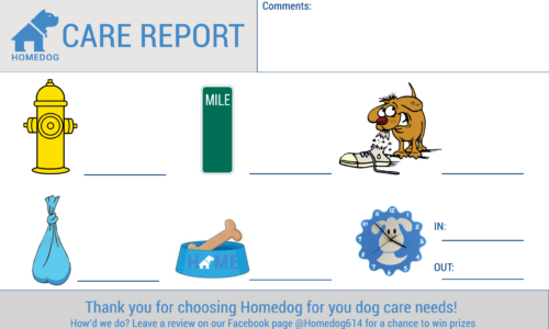 Dog Sitting Care Report